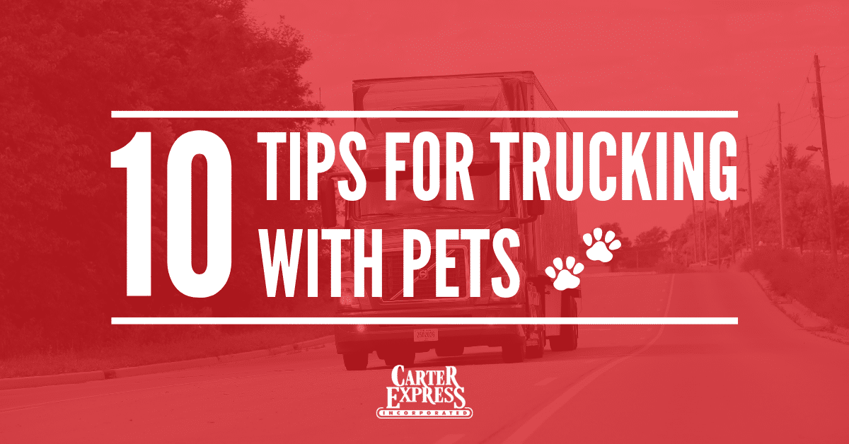 10 tips you need to know about trucking with pets